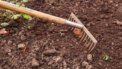 Photo of تحديد اجراءات الحصول على حق الإمتياز للإستصلاح الزراعي في المناطق الجنوبية