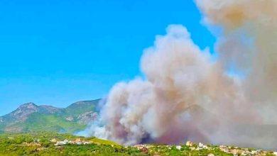 Photo of النيران تلتهم غابات ولاية تيبازة برائحة العمل الإجرامي المنظّم