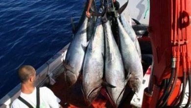 Photo of هذا هو موعد انطلاق حملة صيد التونة الحمراء الحية